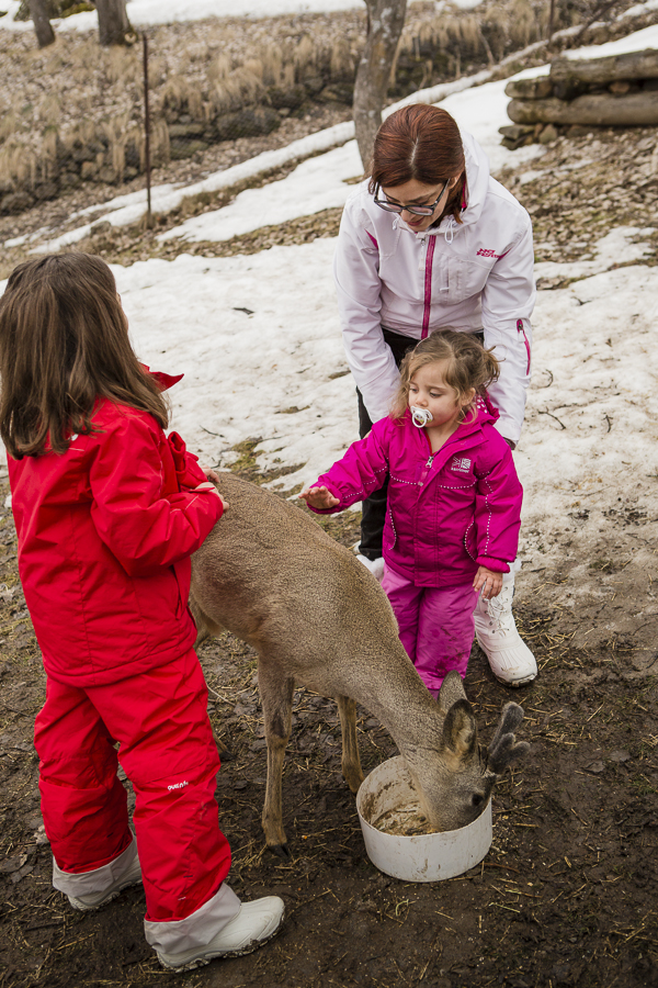 One of the highlights for Maia was feeding and touching an eight month old deer. Robin was less scared of it than she is of dogs!