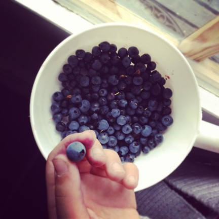 Thanks to a quick consultation with Norwegian Instagrammers, we concluded that the blueberries growing in the forest we were surrounded by were safe to eat (unlike the majority of the hundreds of mushrooms growing there). Maia picked these for our landlord.